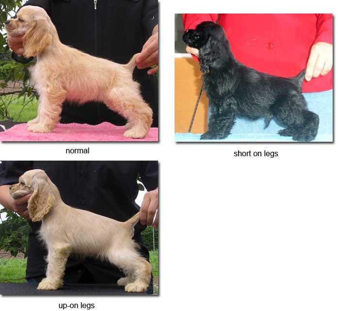 bow legged dog back legs
